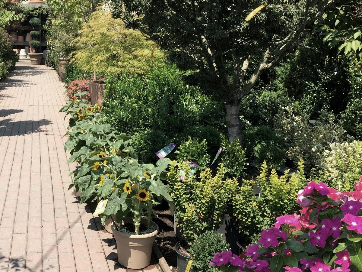 chelsea garden center - Chelsea Garden Center