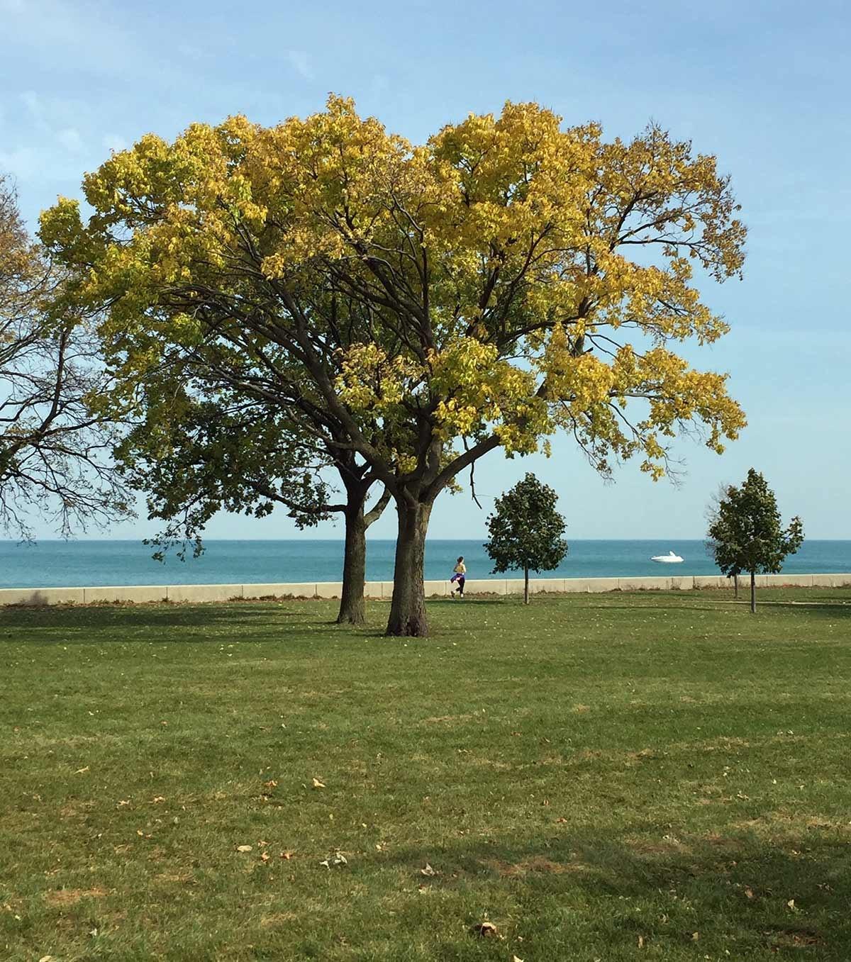Lake Michigan/Belmont Harbor