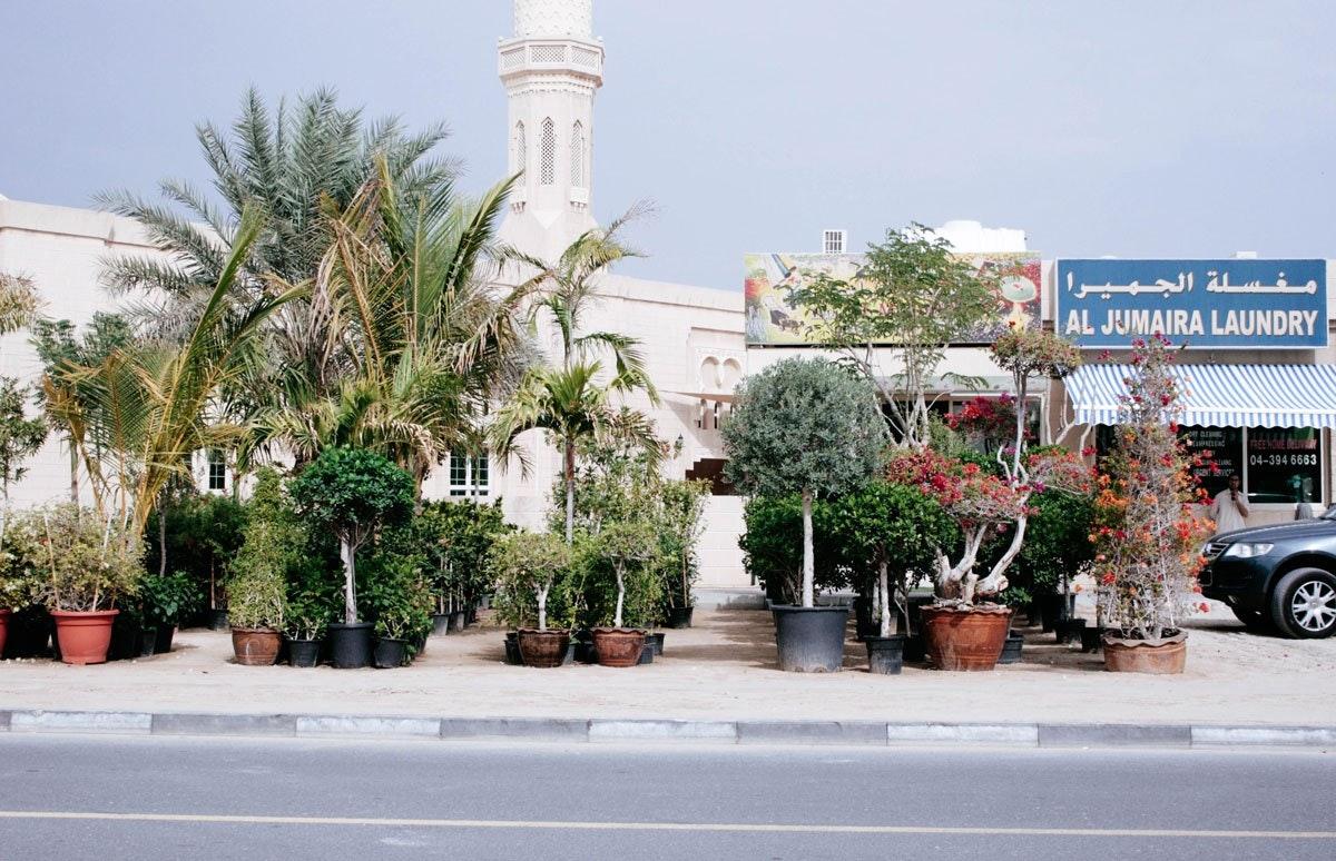 Manarat Al Madina Agriculture