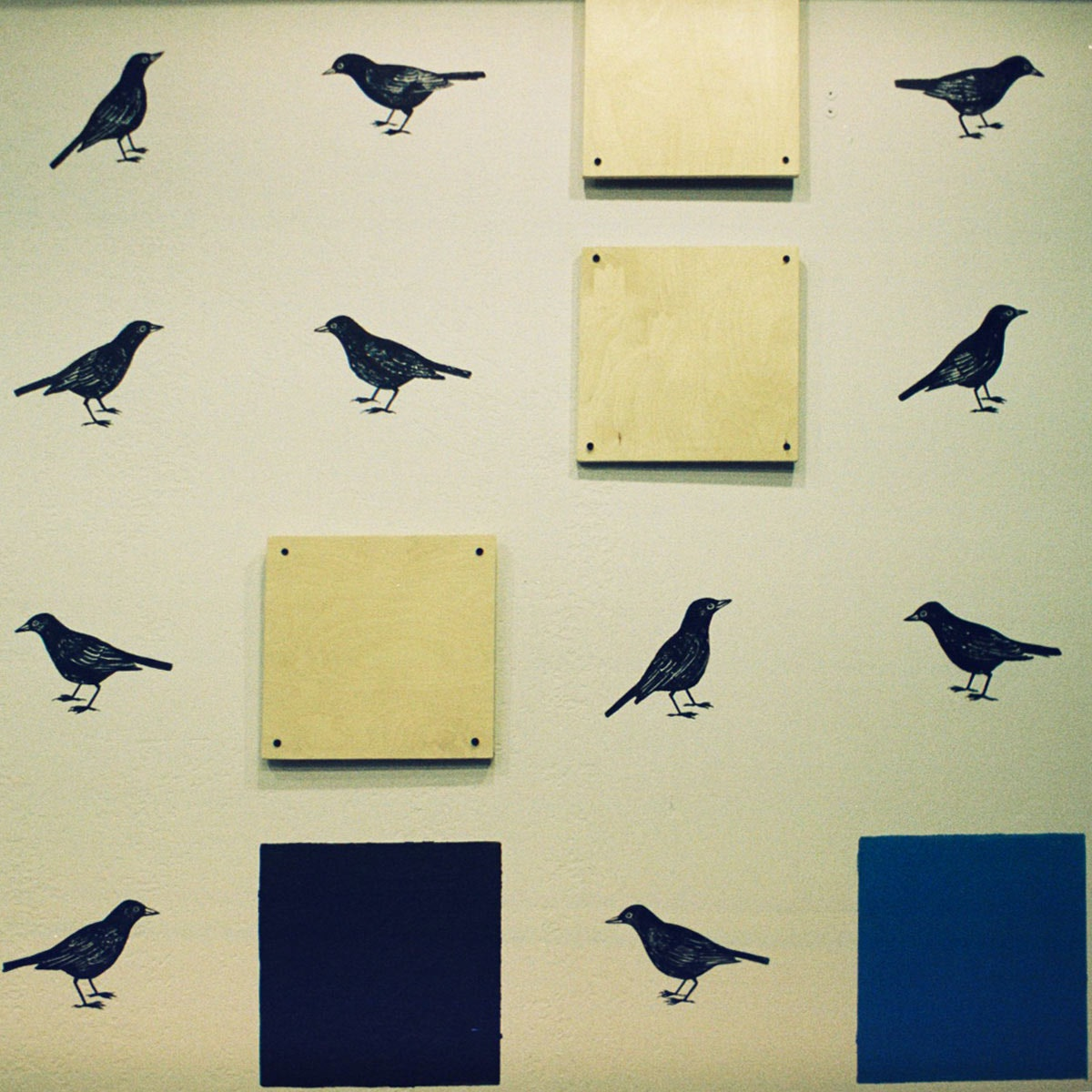 Whitebeard Blackbird