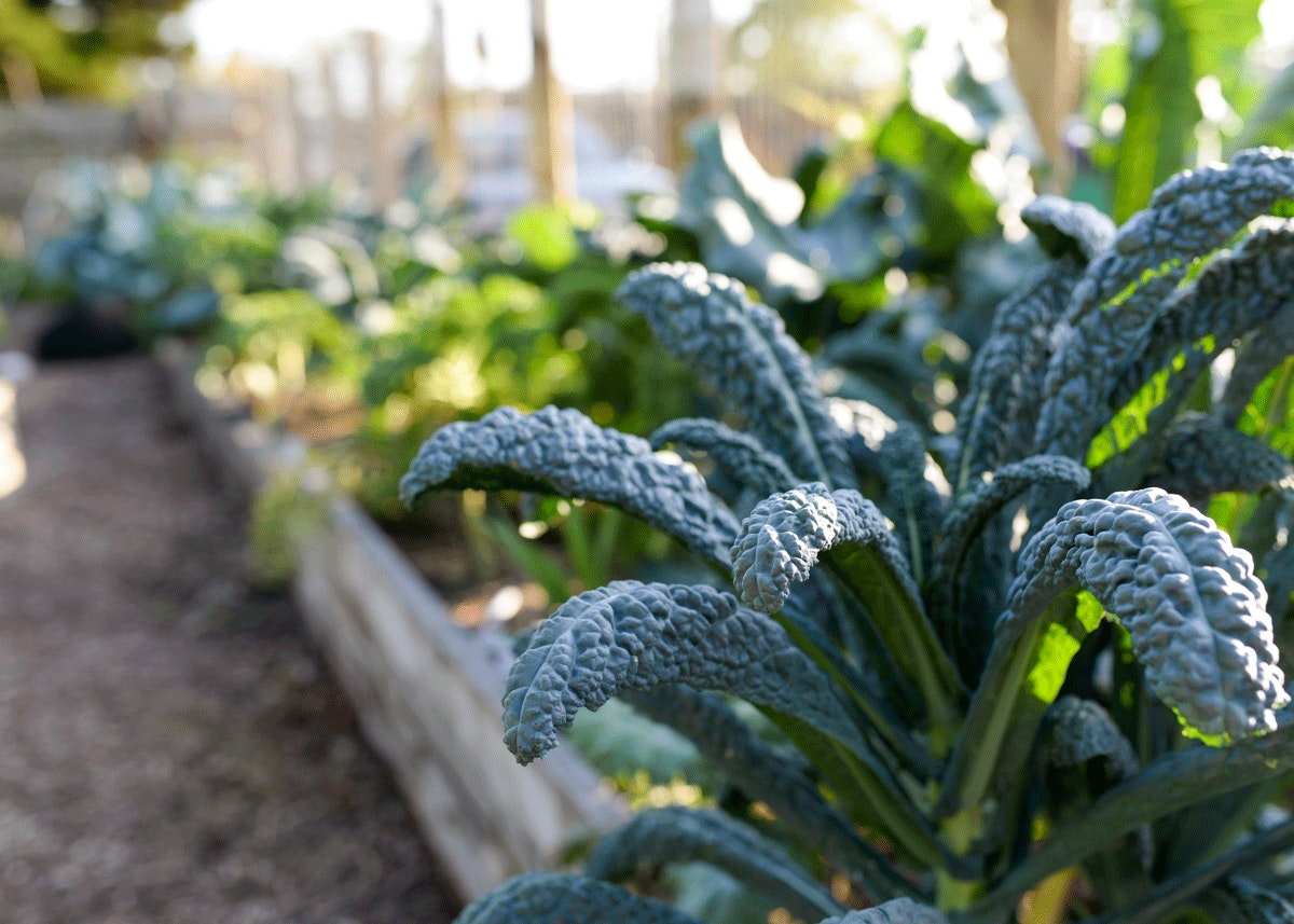 Earth 'n Us Farm