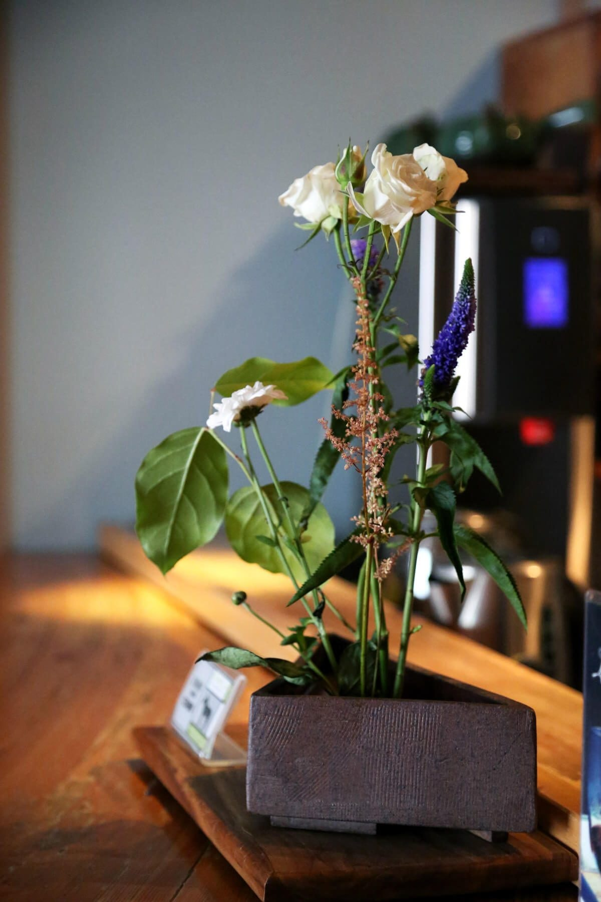 Camellia Sinensis Tea House