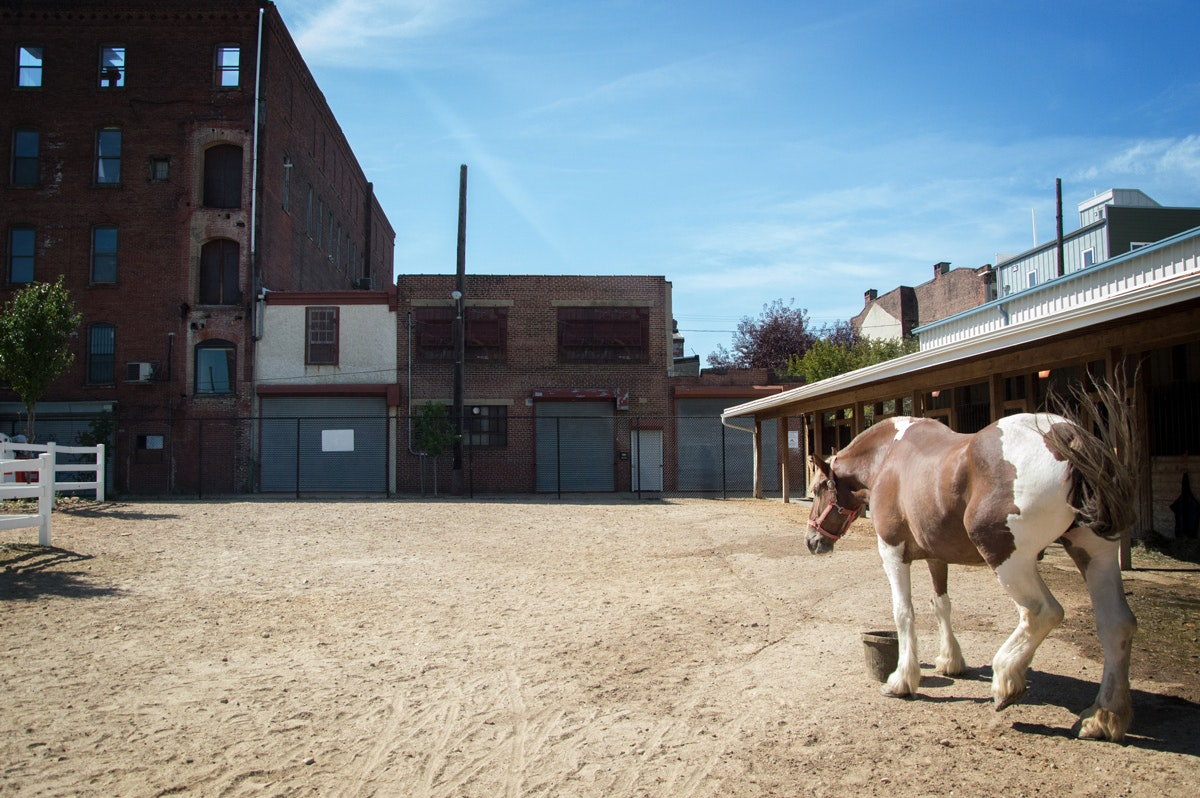Carriage Company Stables