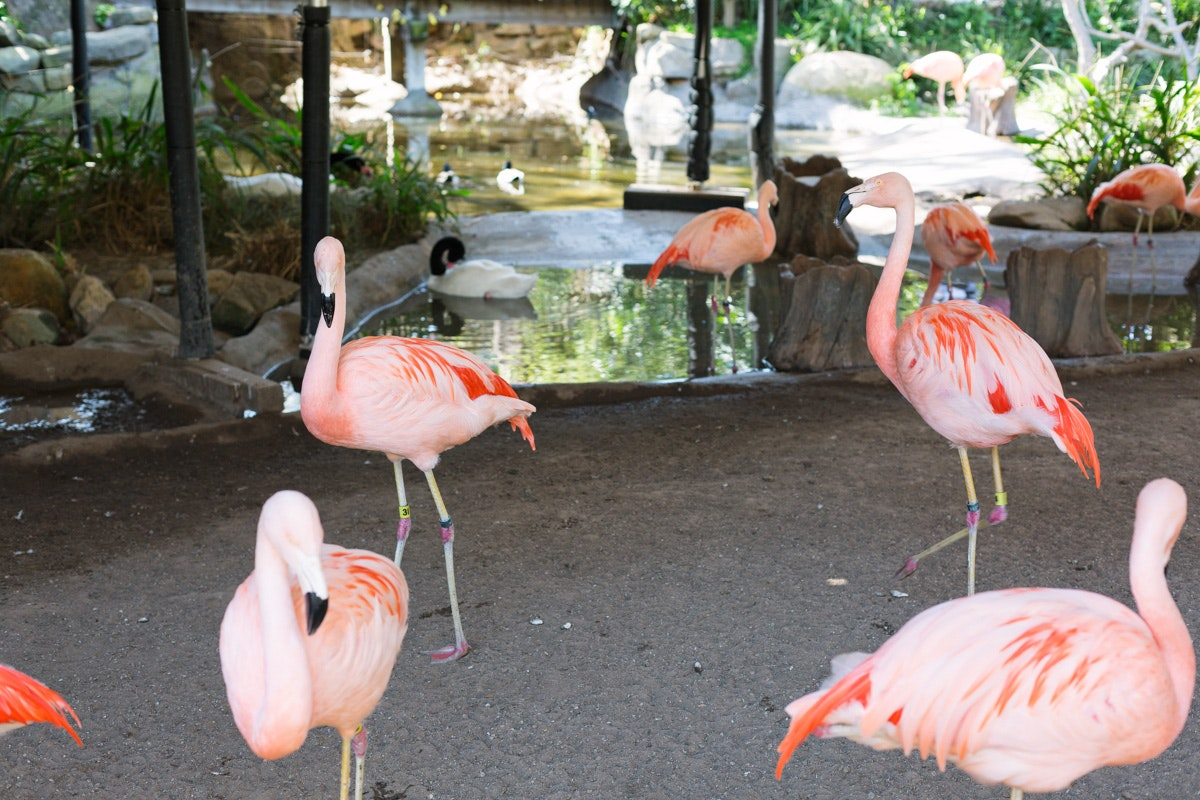 Santa Barbara Zoo