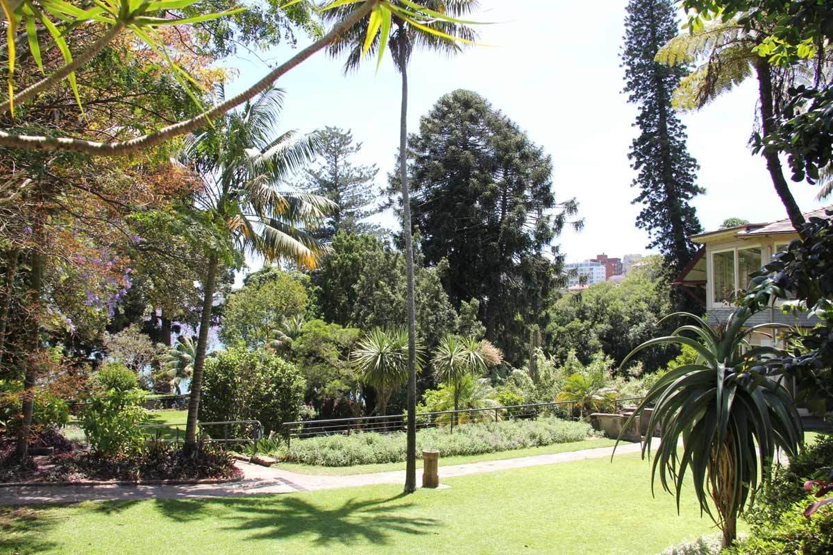 Blackburn Gardens and Double Bay Library